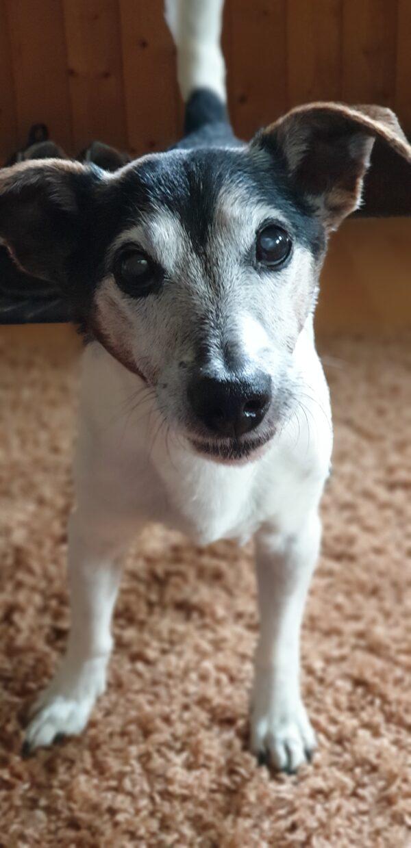 Hundeferien mit Herz   Hundeferien-Vermittlung in Ihrer Umgebung