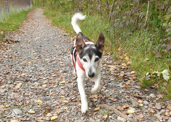 Eva Sturm   Hundeferien mit Herz   Hundeferien-Vermittlung in Ihrer Umgebung