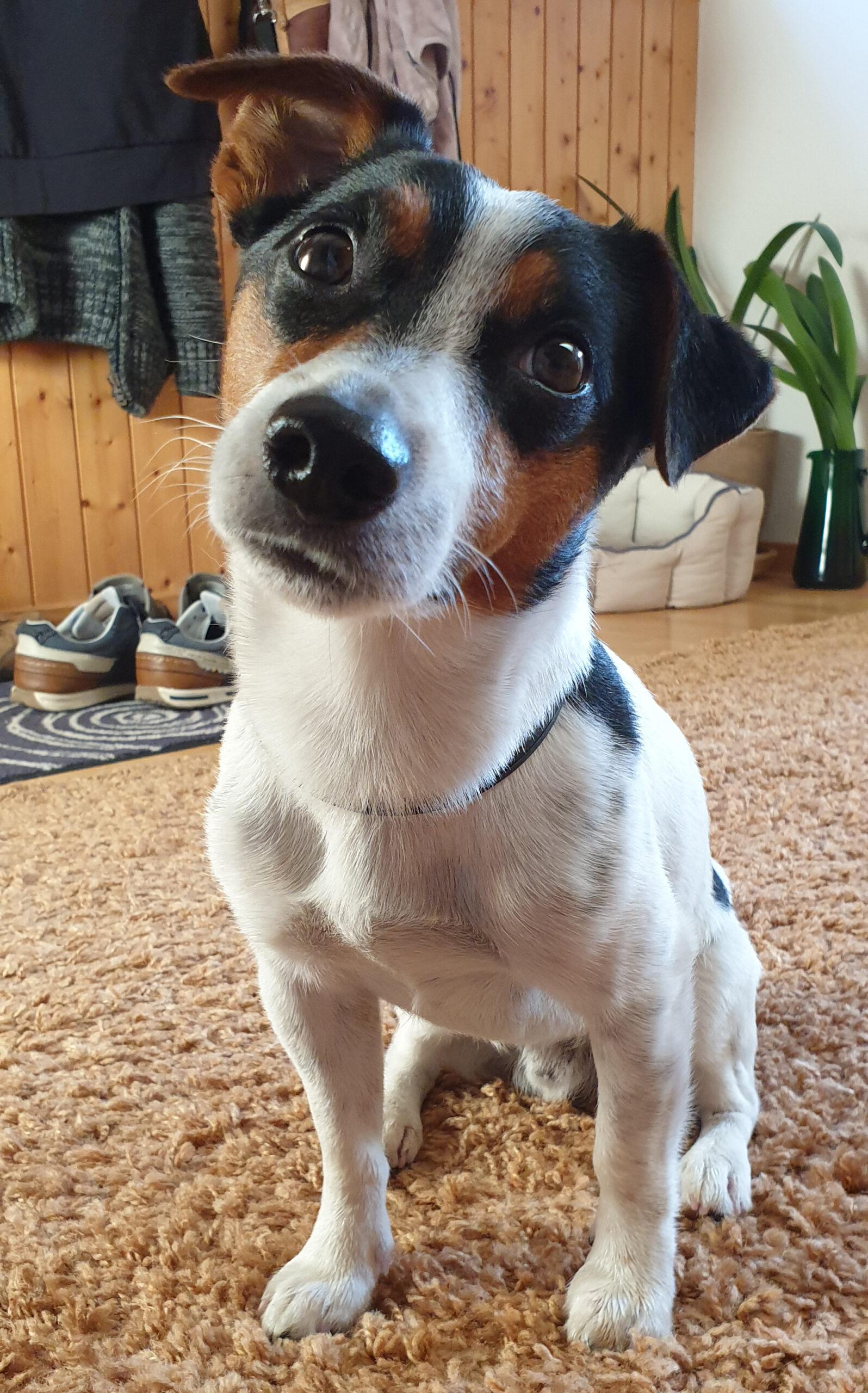 Hundeferien mit Herz | Hundeferien-Vermittlung in Ihrer Umgebung