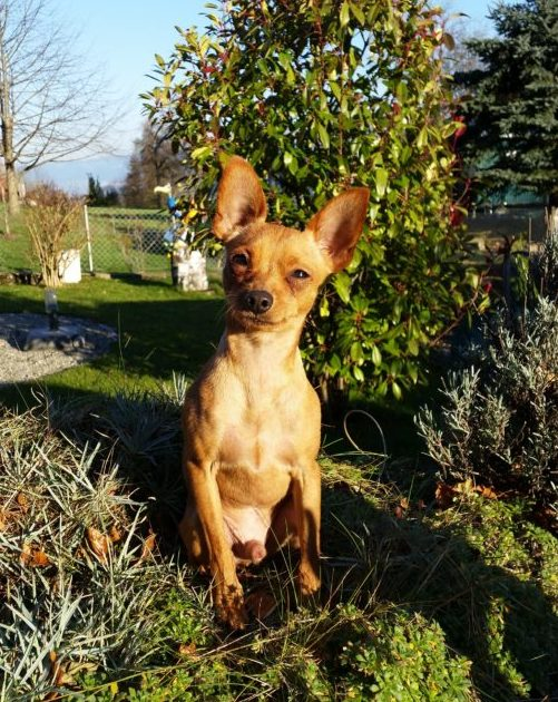 Eva Sturm | Hundeferien mit Herz | Hundeferien-Vermittlung in Ihrer Umgebung
