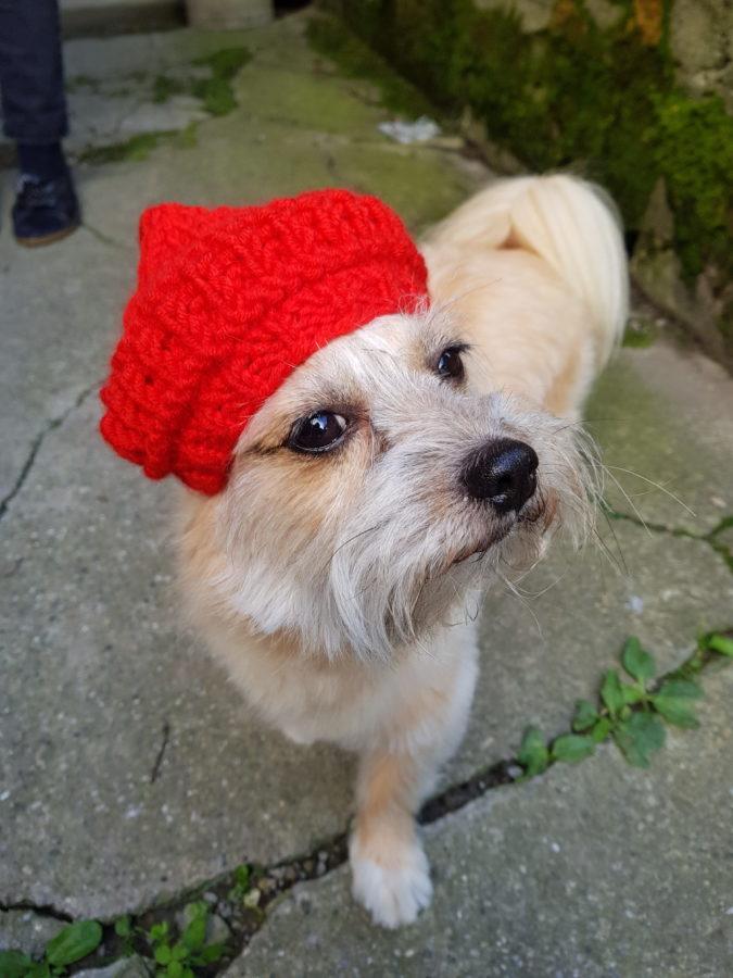 Hundeferien mit Herz | Hundebetreuung privat in der Ostschweiz