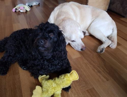 Cleo und Joya