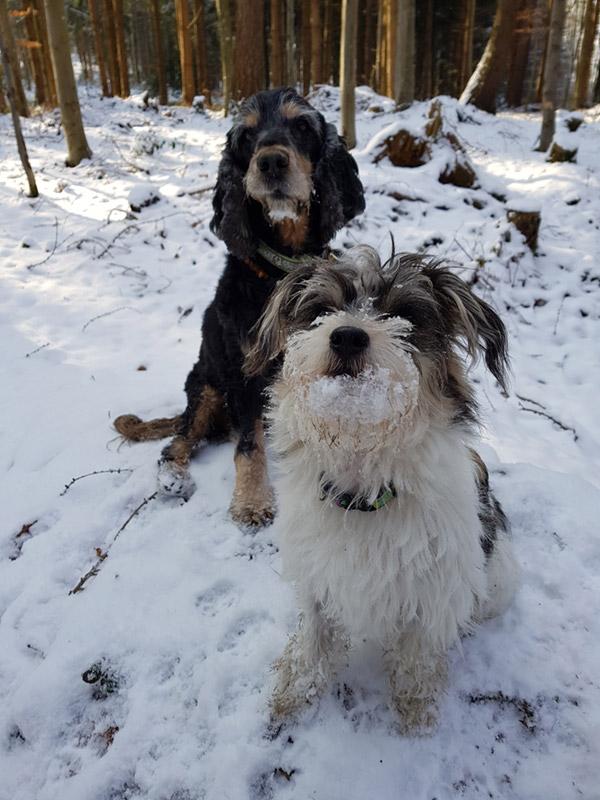 Impressionen Hundesitting in Ihrer Umgebung