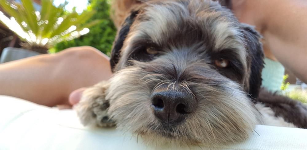 Impressionen Ferienbetreuung für Hunde