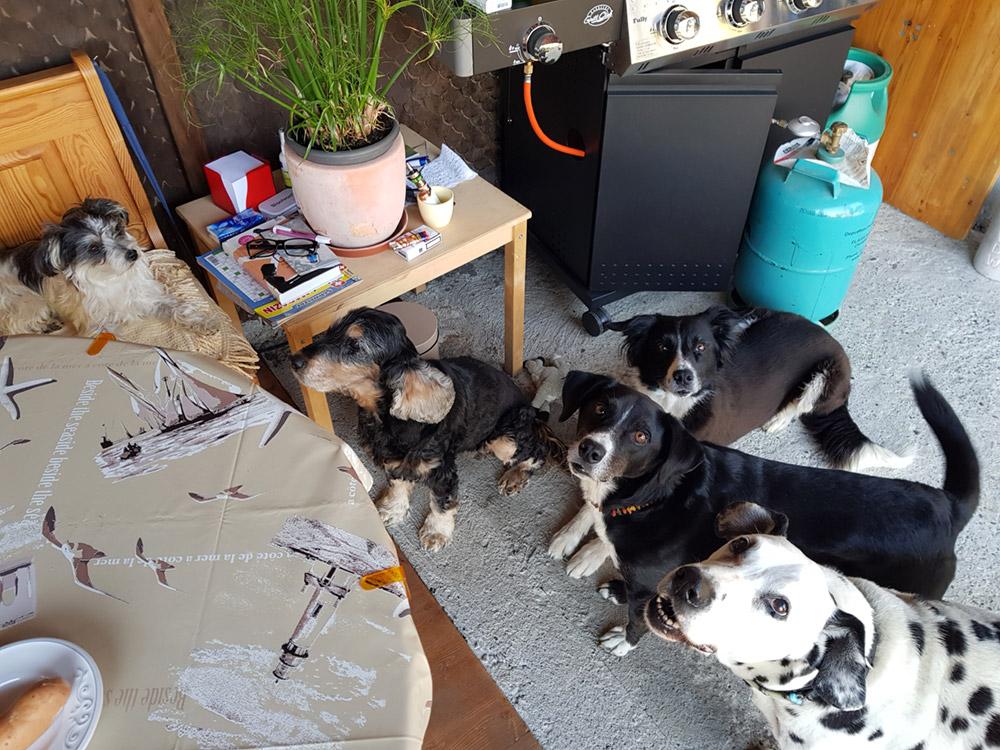 Impressionen Hundeferien mit Herz in der Umgebung Rorschach