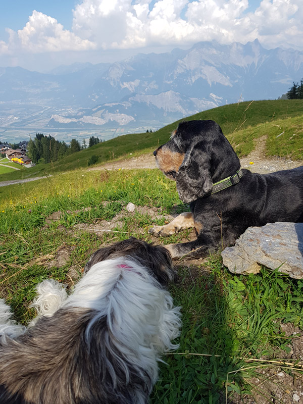Impressionen Hundeferien mit Herz in der Umgebung Rheineck