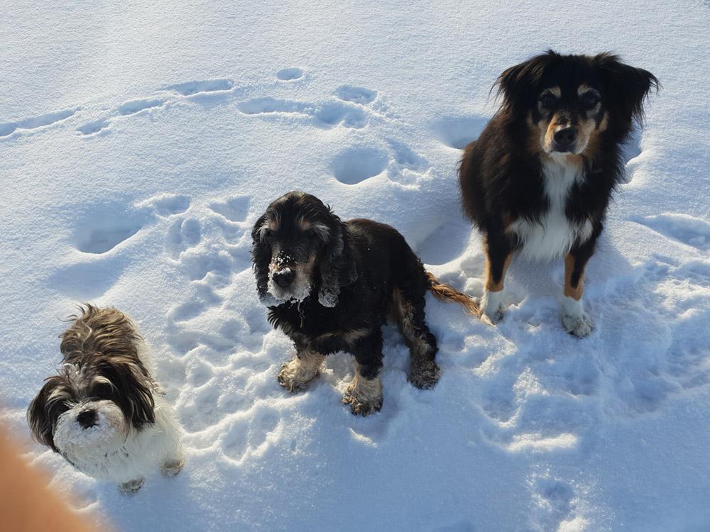 Impressionen Hundeferien mit Herz in der Ostschweiz