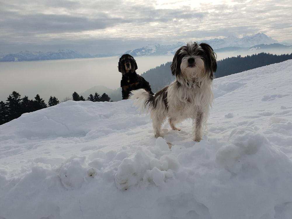 Impressionen Hundeferien mit Herz bei Eva Sturm