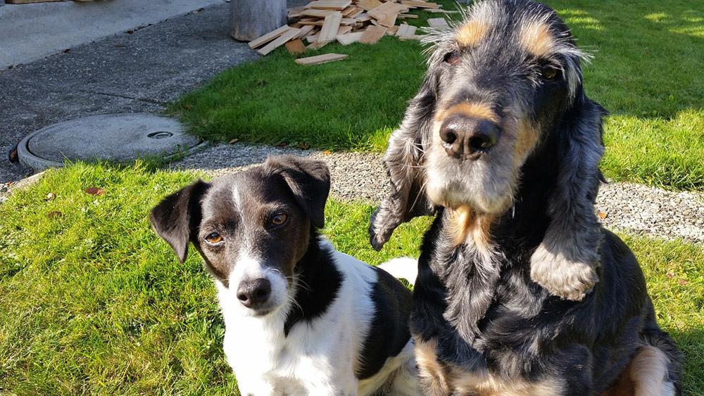 Impressionen Hundeferien mit Herz
