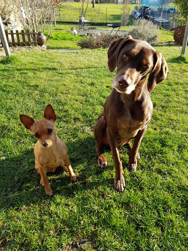 Impressionen Hundeferien mit Artgenosse bei Eva Sturm