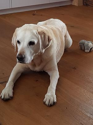 Joya - Hundeferien auch für Ihren Hund