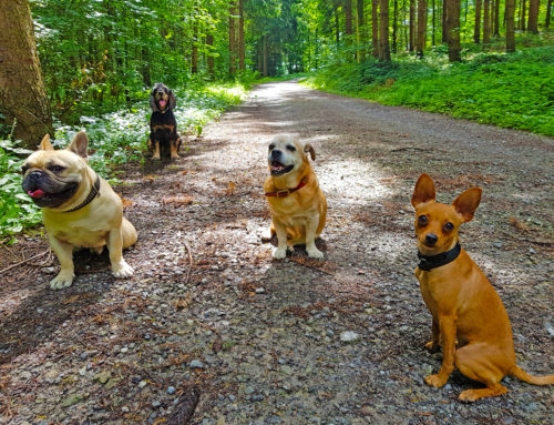 """Einige """"meiner"""" Hunde sagen…"""